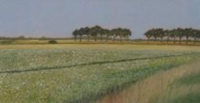 Polder – bloeiend aardappelveld
